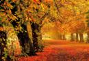 Стихи про осень — подборка коротких и красивых стишков для детского сада и школы